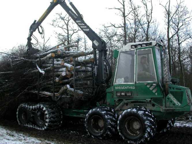 Skovmassakre igang, julen 2003